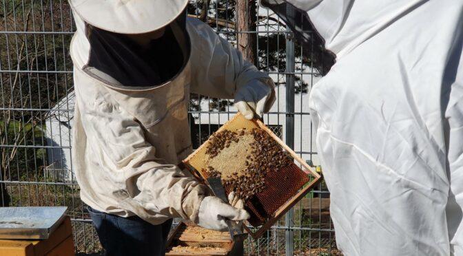 Grum-Bees: Neues Bienen-Projekt
